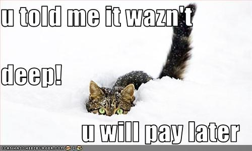 Cheezburger Image 3056746752