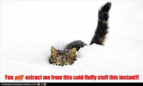 You extract me from this cold fluffy stuff this instant!! will