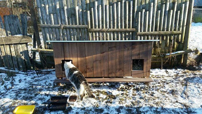 tiny homes for stary cats in Riga