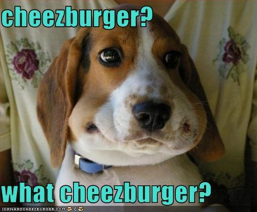 Cheezburger Image 3057292544