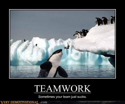penguins whale teamwork idiots