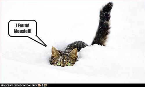 Cheezburger Image 3057789184
