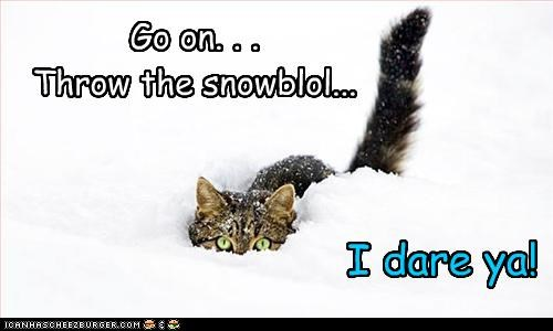 Cheezburger Image 3057930496