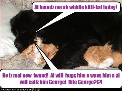 He iz mai new fwend! Ai will hugs him n wuvs him n ai will callz him George! Rite George?!?! Ai foundz me ah widdle kitti-kat today!