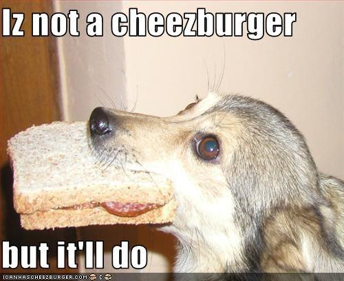 Cheezburger Image 3059051264