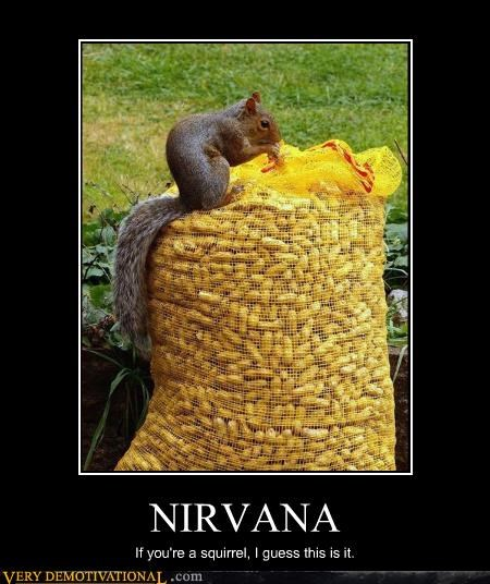 NIRVANA If you're a squirrel, I guess this is it.