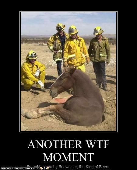 Cheezburger Image 3059689728