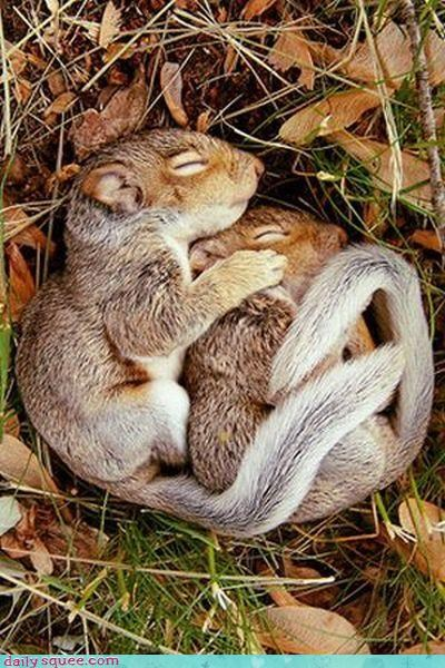 cute,spooning,squirrels