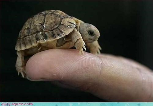 baby so tiny turtle - 3059966208