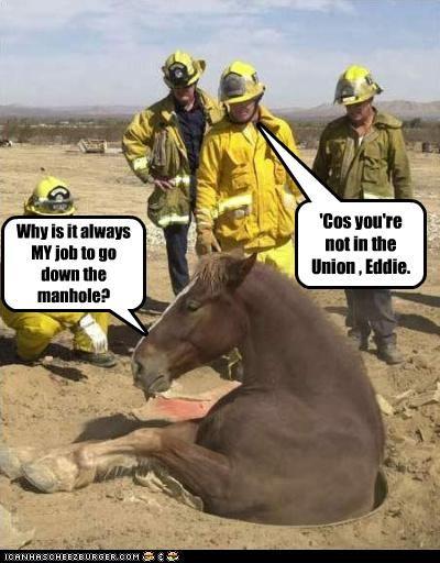 firemen horse rescue stuck unions - 3060064768