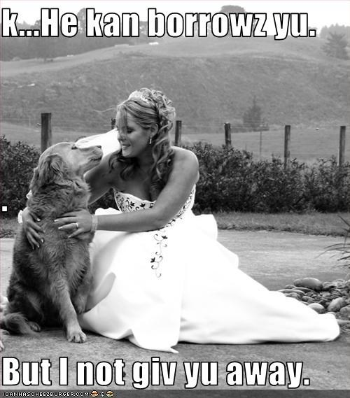 borrow,give,golden retriever,human,protective,wedding
