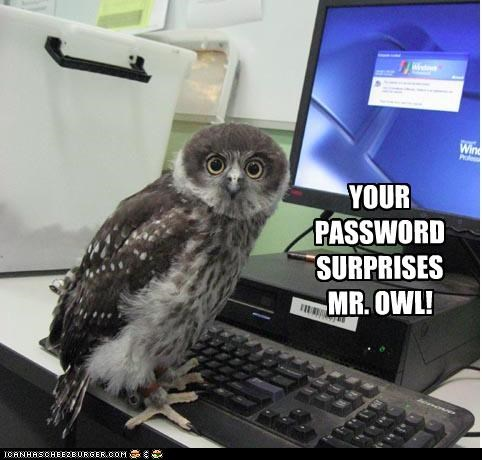 YOUR PASSWORD SURPRISES MR. OWL!