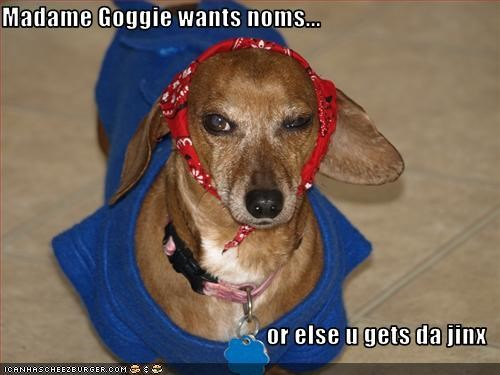 curse,dachshund,gypsy,headscarf,nom