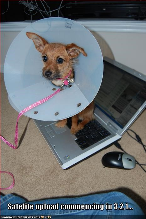 computer cone upload whatbreed