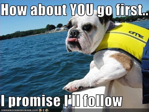 boat,bulldog,diving,floats,water