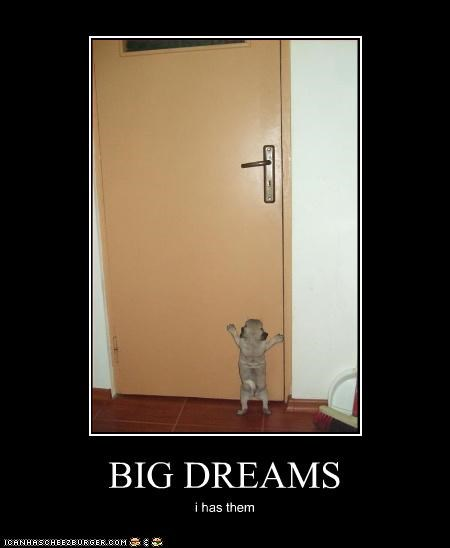 door,dreams,pug,puppy
