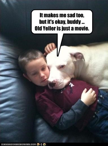 comforting crying human kid old yeller pitbull