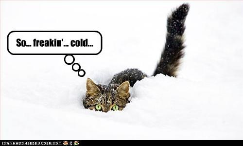 Cheezburger Image 3064975616