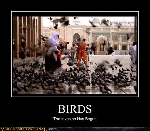 birds,hitchcock,scary
