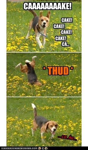 Cheezburger Image 3066468608