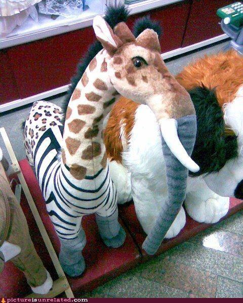 animals mash-ups wtf - 3066592768