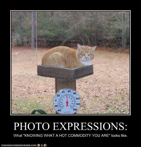 Cheezburger Image 3066795008