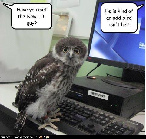Have you met the New I.T. guy? He is kind of an odd bird isn't he?