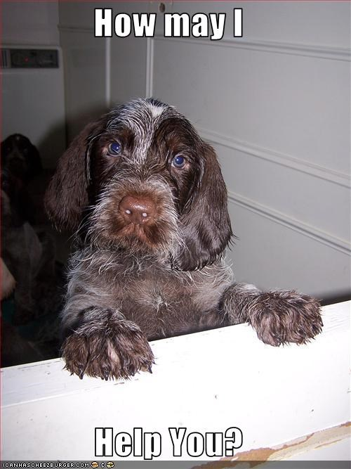 counter german short haired pointer help - 3067463424