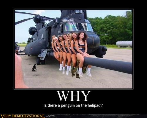 helicopter,hooters,penguins,Pure Awesome