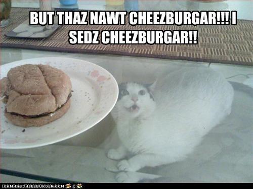 Cheezburger Image 3068132352