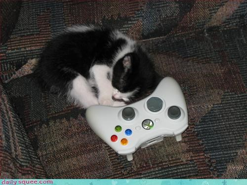 gamer kitten sleeping - 3068288768