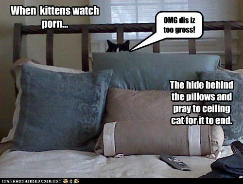OMG dis iz too gross! When kittens watch porn... The hide behind the pillows and pray to ceiling cat for it to end.