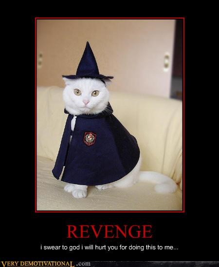 cat costume wizard - 3068594688
