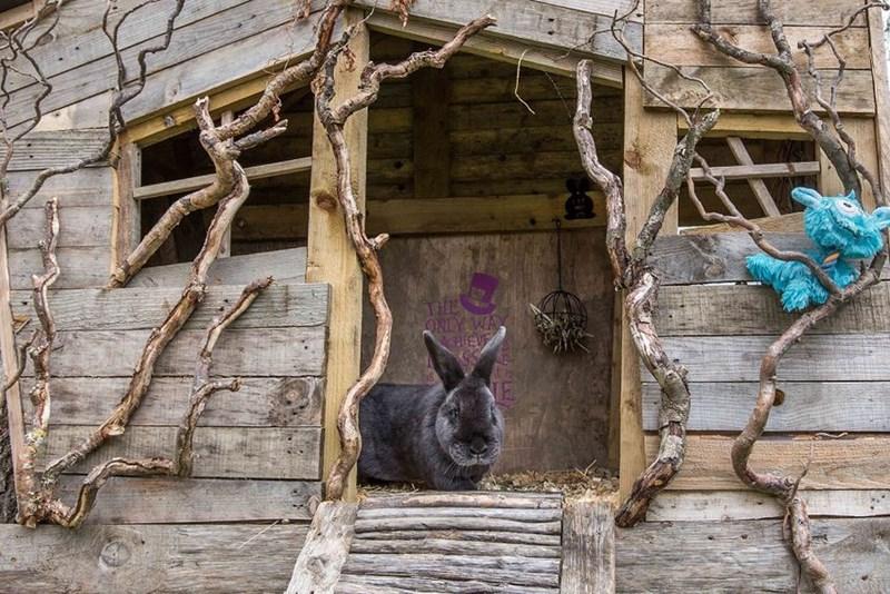 30 rabbits get a paradise garden