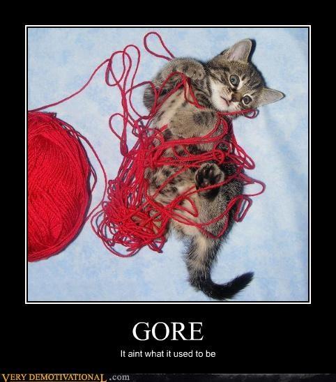 cat wtf gory - 3068874496