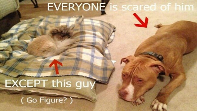 photos of dogs scared of cats