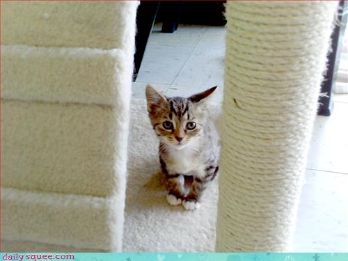 ceiling cat kitten sets - 3069115392