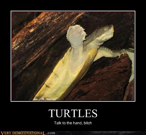 talk to the hand,turtle