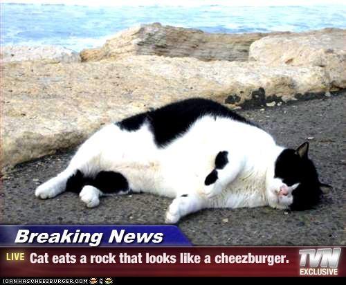 Cheezburger Image 3069387008