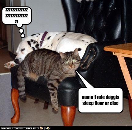 Cheezburger Image 3069653760