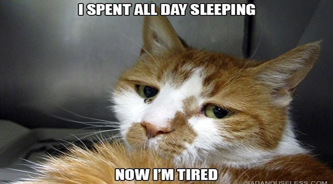 15 photos of cat life problems