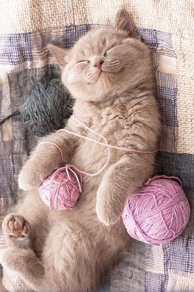 photo of a cat smiling and sleeping with some balls of knit - cover for a list of cat mythes that turned out to be not true