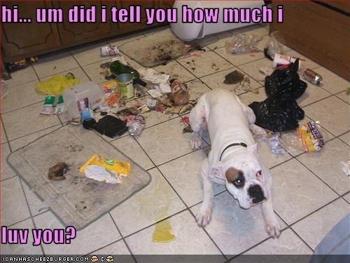 american bulldog,destruction,floor,garbage,kitchen,love,pee