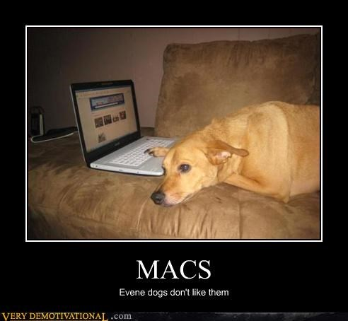 MACS Evene dogs don't like them