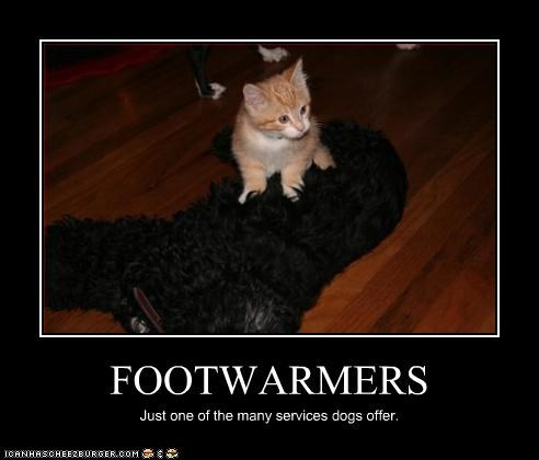 FOOTWARMERS Just one of the many services dogs offer.