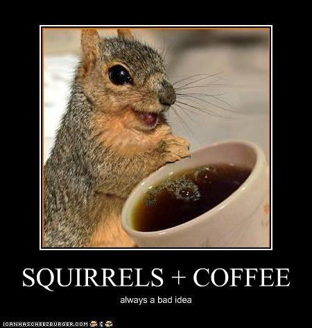 SQUIRRELS + COFFEE always a bad idea