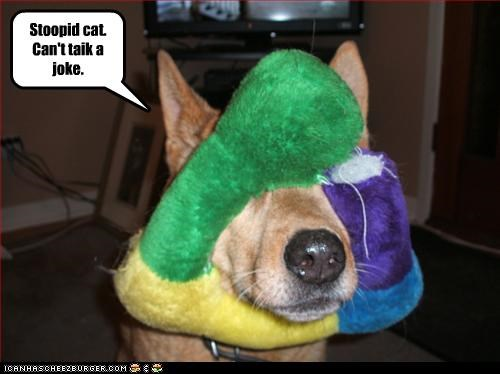 face,german shepherd,joke,lolcats,nose,stuffed toy,stupid