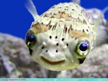 box fish,cute,fish