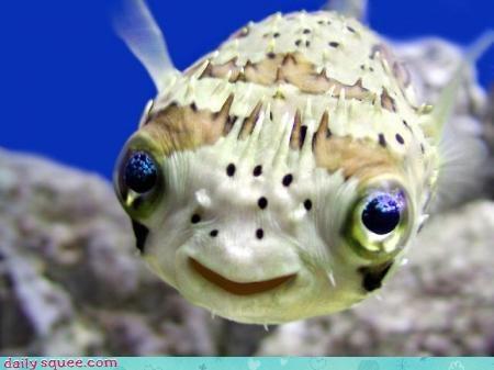 box fish cute fish - 3071365632