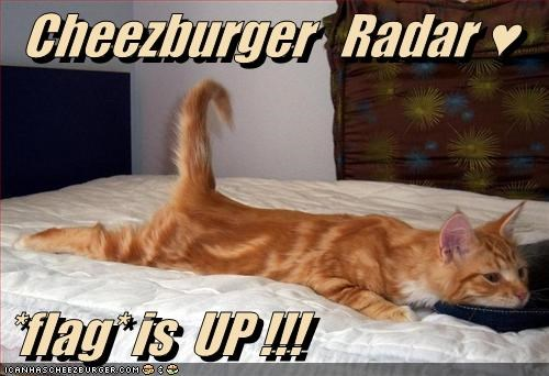 Cheezburger Image 3073707776